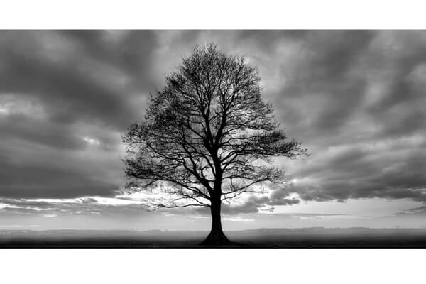 Lonely Tree plakat til stuen 140x70